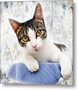 Grand Kitty Cuteness 2 Metal Print by Andee Design