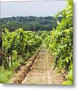 Grape Vines At Fall Creek Vineyards Metal Print by James Forte