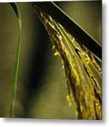 Grass Plume Metal Print