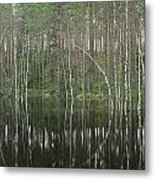 High Waters In A Forest Of Evergreens Metal Print by Mattias Klum