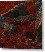 Huckleberry Bushes And Multi-hued Metal Print by Michael Melford