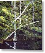 Jackson Bluff On The Waccamaw River Metal Print