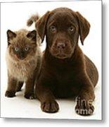 Labrador Pup And Birman-cross Kitten Metal Print