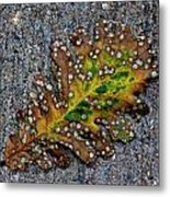 Leaf On The Sidewalk Metal Print by Robert Ullmann