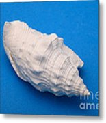 Lime Made From A Seashell Metal Print by Ted Kinsman