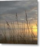 Looking Back Metal Print by Lynn Davenport