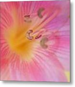 Lovely Lily Metal Print by Kathy Yates