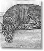 Lying Low - Doberman Pinscher Dog Art Print Metal Print