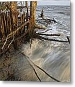 Mangrove Trees Protect The Coast Metal Print