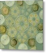 Microscopic Arrangement Metal Print by Darlyne A. Murawski
