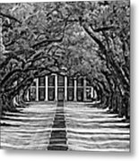 Oak Alley Monochrome Metal Print by Steve Harrington
