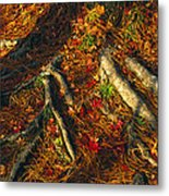 Oak Tree Roots And Pine Needles Metal Print by Raymond Gehman