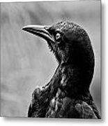 On Alert - Bw Metal Print