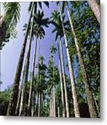 Palm Trees Against The Sky Metal Print