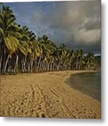 Palm Trees Line A Dominican Republic Metal Print by Raul Touzon