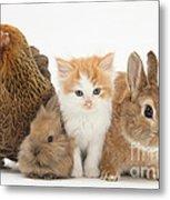 Partridge Pekin Bantam With Kitten Metal Print