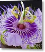 Passion Flora Metal Print by Juergen Roth
