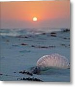 Peaceful Man Of War Metal Print by Charles Warren