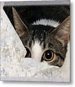 Peek A Boo I See You Too Metal Print by Andee Design