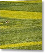 People In A Rapeseed Field Metal Print by David Evans