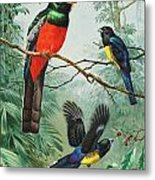 Perched And Flying Trogons Are Seen Metal Print