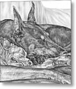 Pleasant Dreams - Doberman Pinscher Dog Art Print Metal Print by Kelli Swan
