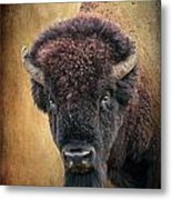 Portrait Of A Buffalo Metal Print by Tamyra Ayles