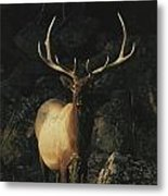 Portrait Of A Bull Elk With Large Metal Print by Michael S. Quinton