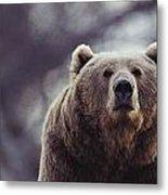 Portrait Of A Kodiak Brown Bear Metal Print