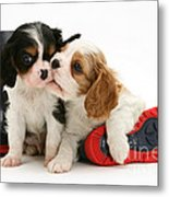 Puppies With Rain Boots Metal Print by Jane Burton