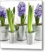 Purple Hyacinths Metal Print by Sandra Cunningham