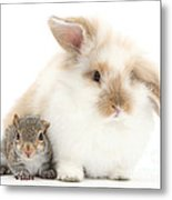 Rabbit And Squirrel Metal Print by Mark Taylor