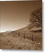 Ranch Road Oak Metal Print