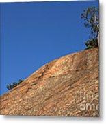 Red Pine Tree Metal Print by Ted Kinsman