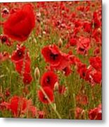 Red Poppies 4 Metal Print