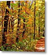 Red Run Trail Metal Print by Ed Smith