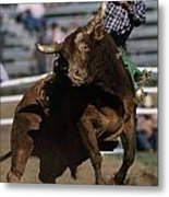Rodeo Competitor In A Steer Riding Metal Print by Chris Johns