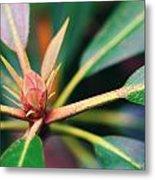 Rosebay Rhododendron Bud Metal Print