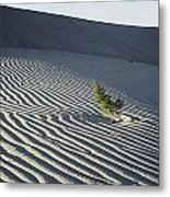 Sand Dunes, Death Valley, California Metal Print