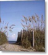 Sea Oats Line The Path Metal Print