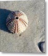 Sea Urchin And Shell Metal Print