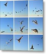 Seagull Collage 2 Metal Print