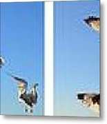 Seagull Collage Metal Print