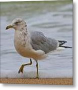 Seagull Stomp Metal Print