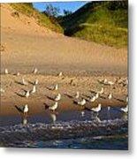 Seagulls At The Bowl Metal Print