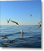 Seagulls Over Lake Michigan Metal Print by Michelle Calkins