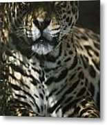Shadows Flicker Over A Jaguar Panthera Metal Print by Hope Ryden