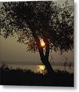 Silhouette Of Willow Tree At Sunset Metal Print