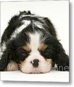 Sleeping Puppy Metal Print by Jane Burton