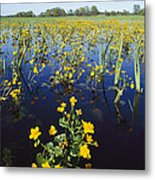 Spring Flood Plains With Wildflowers Metal Print